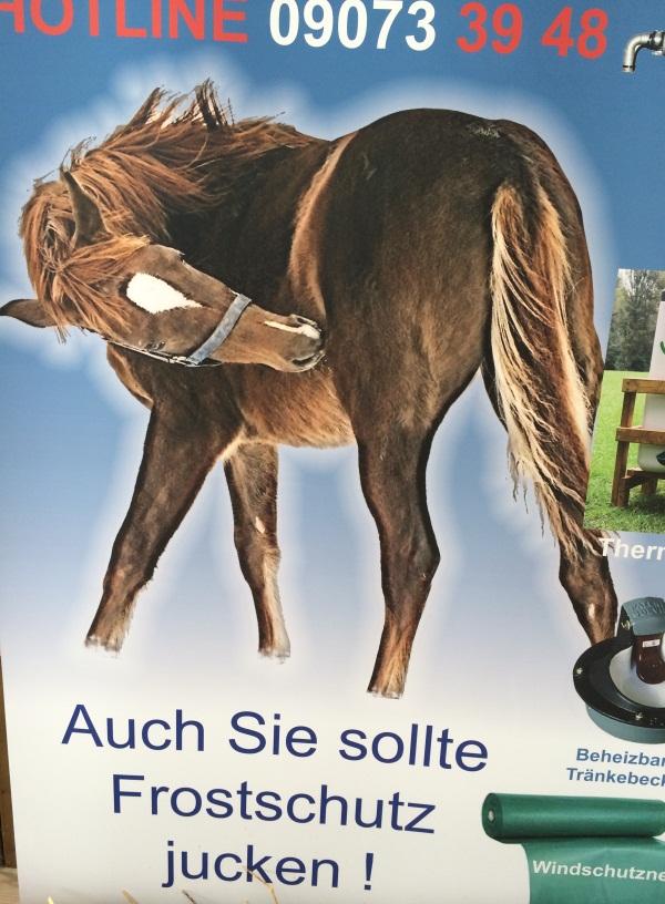 horse-psd