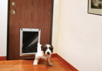 dog-door1
